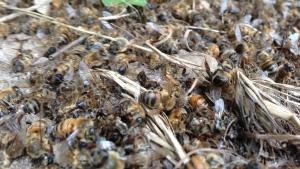 Bees DE