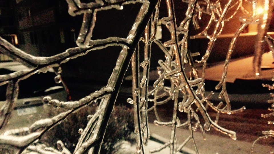 A tree branch can be seen covered in ice, following freezing rain in Barrie, Ont. on Dec. 29, 2015. (Adam Ward/ CTV Barrie)