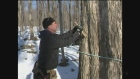 CTV Barrie: Maple syrup preparations