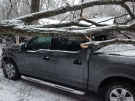Power lines and trees were brought down across central Ontario on Friday, March 25, 2016. (Roger Klein/ CTV Barrie)