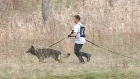 CTV Barrie: Police dogs compete for top honours