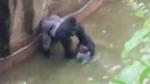 CTV National News: Backlash over gorilla shooting