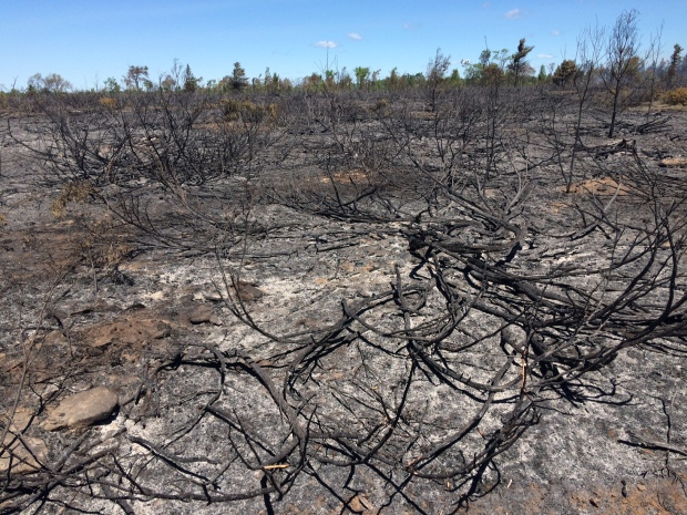 The charred remains of a 20 hectare brush fire in Sebright, Ont. can be seen on Tuesday, June 21, 2016. (Mike Walker/ CTV Barrie)