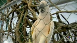 Parrot refuge in Coombs closes its doors