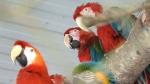 Bird sanctuary closing