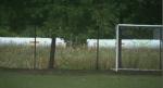 The massive propane tanks are behind the school yard.