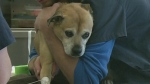 CTV Barrie: Blood donor clinic for pets