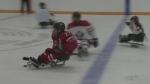 CTV Barrie: Elmvale Bears Sledge Hockey