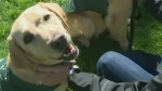 CTV Barrie: Walk supports guide dog training