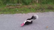 Extended: Man helps stuck skunk