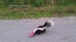 Extended: Man helps stuck skunk