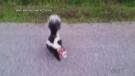CTV Barrie: Saving a skunk goes viral