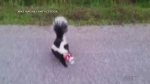 CTV Barrie: Saving a skunk goes viral