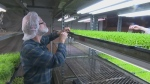Fresh Food Ideas: Farming micro-greens