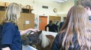 CTV Barrie: Agriculture lesson