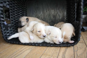 Four puppies are being nursed back to health after being found abandoned in a Midland, Ont. ditch. (Ontario SPCA)